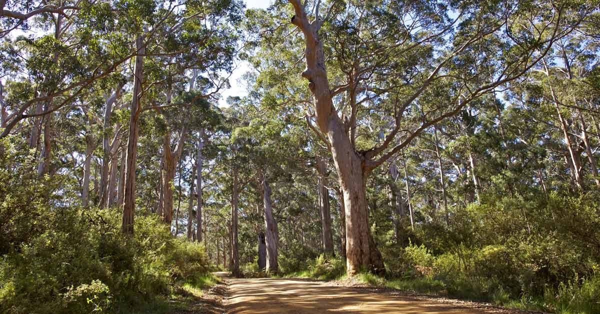 nature bushwalk Local Activities to Help you Stay Active BodyViva Springwood